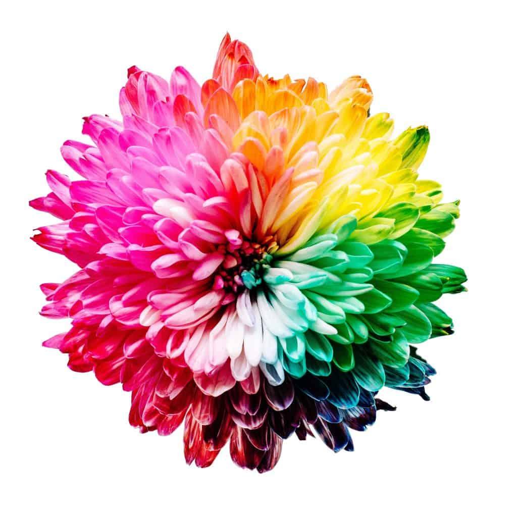 flower-amaygo